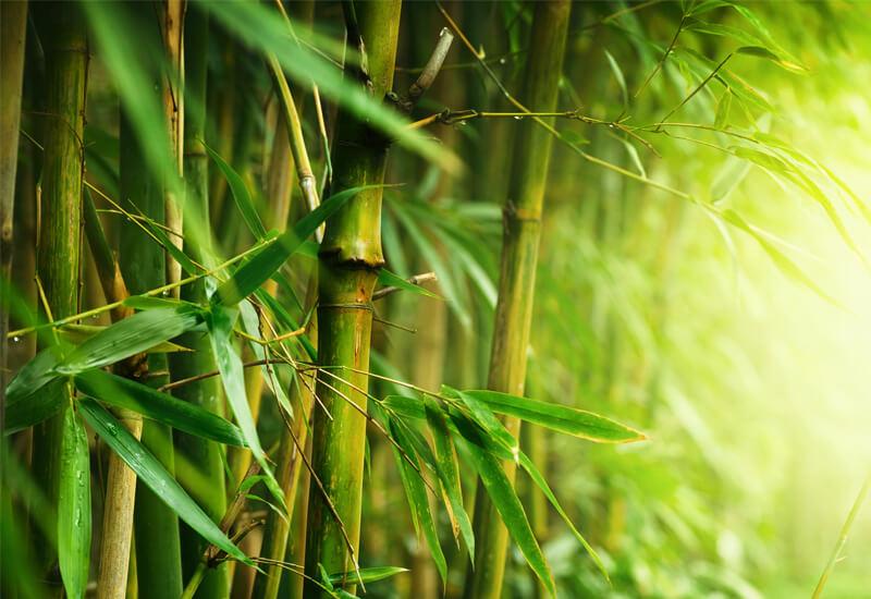 Idealna kombinacija bambusa in mikrovlaken za udobje in toploto skozi celo leto