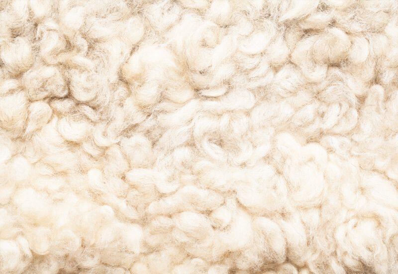 Ovčja volna kot najboljši naravni termoregulator