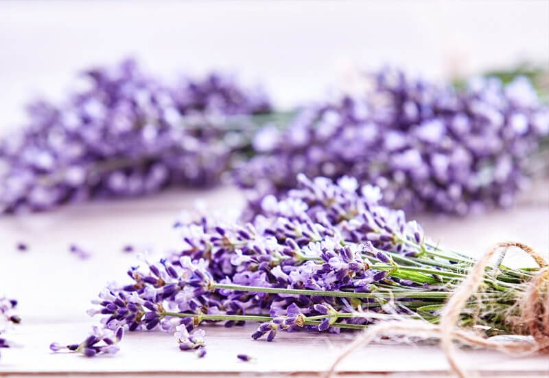 Aromaterapija s sivko, ki pomirja in zaziba v miren spanec